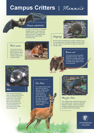 Wc campus critters posters page 1